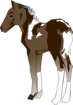 pony,horse,foal,cavalinho,animal,mammal,quadruped,media,clip art,public domain,image,png,svg