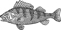 scaly,fish,animal,ocean,media,clip art,externalsource,public domain,image,png,svg