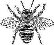 queen,animal,insect,bee,biology,zoology,entomology,line art,black and white,contour,outline,media,clip art,externalsource,public domain,image,png,svg,wikimedia common,psf,wikimedia common,wikimedia common,wikimedia common
