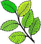 summer,leaf,remix,color,drawing,trace,tree,branch,twig,green,plant,nature