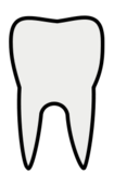 tooth,line art,outline,coloring page,contour
