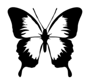 animal,insect,butterfly,outline,media,clip art,public domain,image,svg