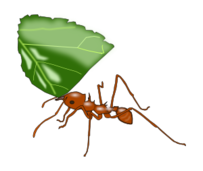 media,clip art,public domain,image,svg,png,color,animal,ant,atta,insect