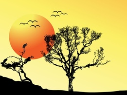 Backgrounds,Nature,Silhouette