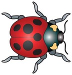 red,bug